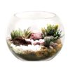 Burligio Ready Made Terrarium